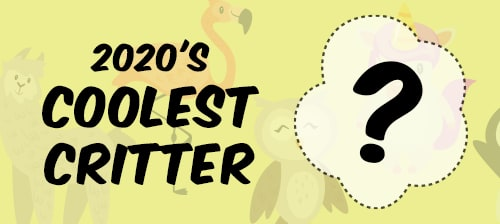 Preview 2020's Coolest Critter Contest