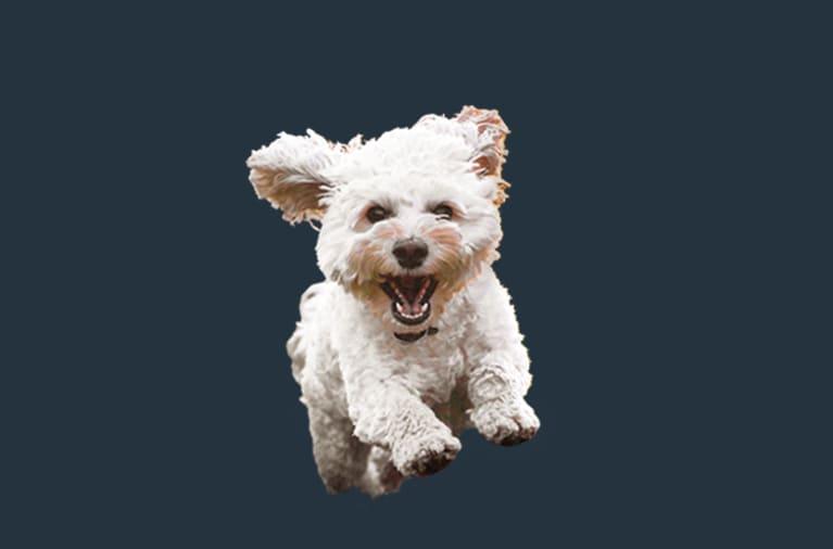 Foto von freigestelltem Hund ohne Hintergrund