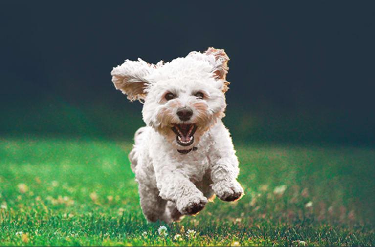 Foto van een hond met achtergrond