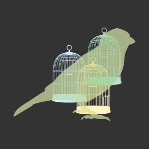 bird and cages