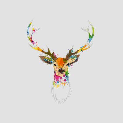 cerf colorée