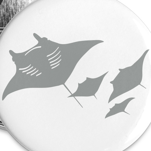 manta ray rochen taucher tauchen scuba diving dive