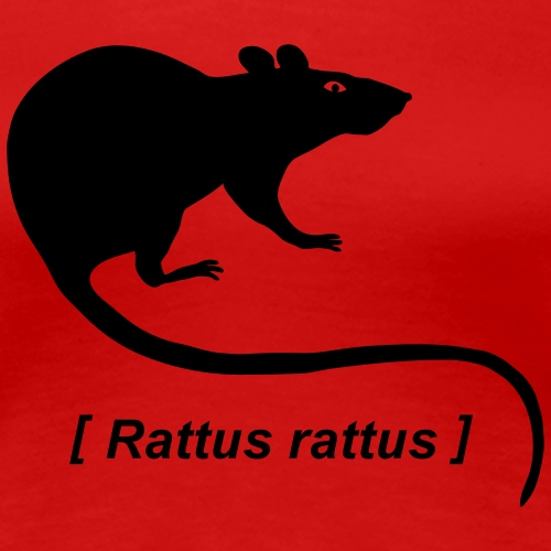 rat rats duo ratty mouse mice animal  Rattus