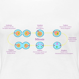 Mitosis Explained - Women's Premium T-Shirt