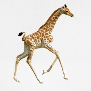 Isolated baby giraffe running - Casquette classique