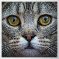 Design ~ Bengal Cat Mug