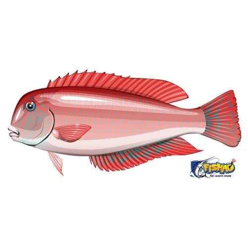 FISHAO Pearly-Razorfish