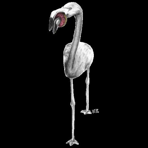 Flamingo Eating Donut