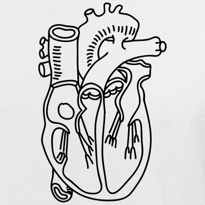 Herz Muskel Medizin Blut