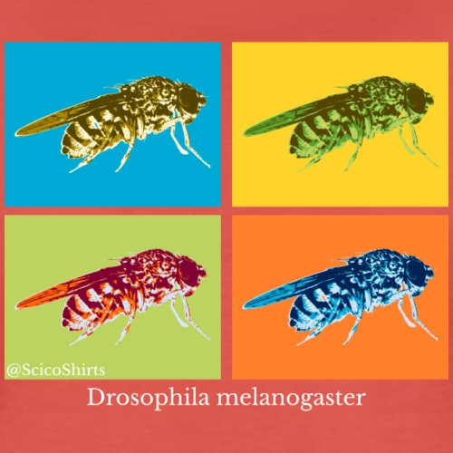 Pop Art Drosophila (white)