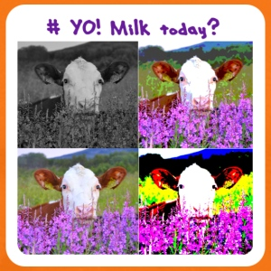 # Yo! Milk Today? - Premium T-skjorte for menn