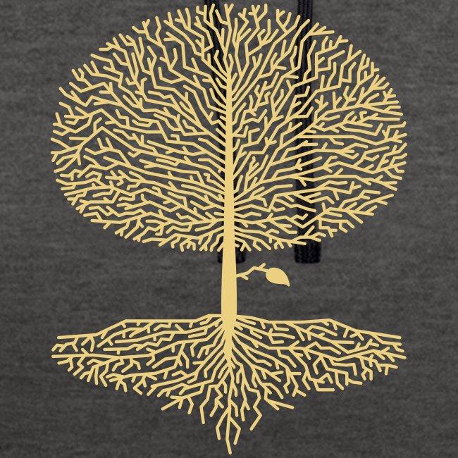 Laubbaum Krone Wald Eiche Buche Natur Linde Äste