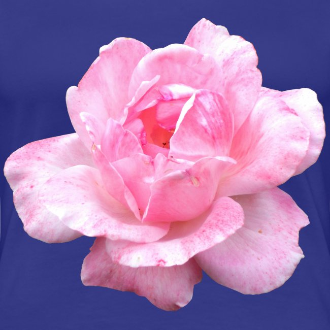 Rose-7
