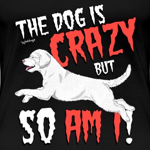 Spanish Water Dog Crazy 14