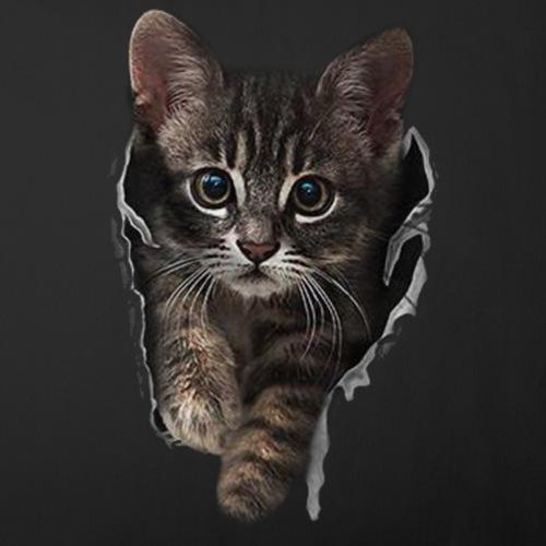 Katze Riss