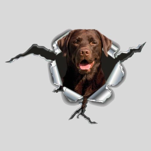 Labrador auf Metall