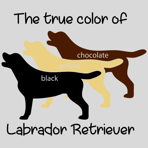 True Color Labrador