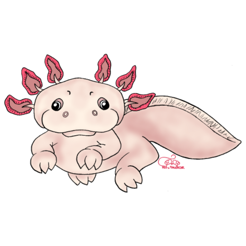 Axenia Axolotl