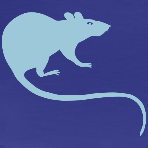 rat rats duo ratty mouse mice animal  Rattus