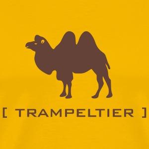 trampeltier kamel dromedar höcker tier