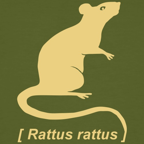Ratte Maus Nager Nagetier Rattus