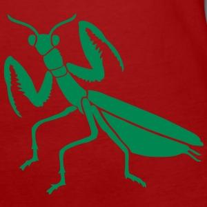 gottesanbeterin mantis praying insekt stabschrecke fangschrecke