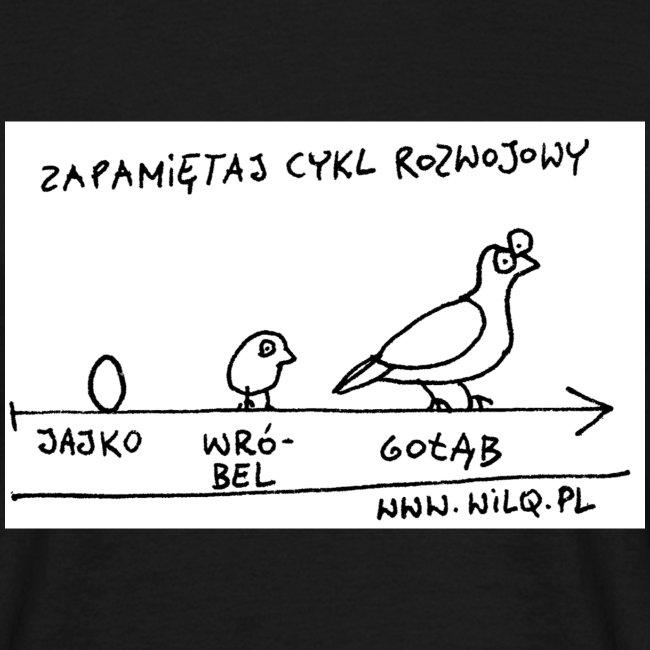 Cykl rozwojowy na czarnej