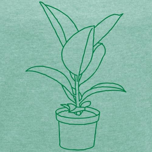 GUMMIBAUM Zimmerpflanze
