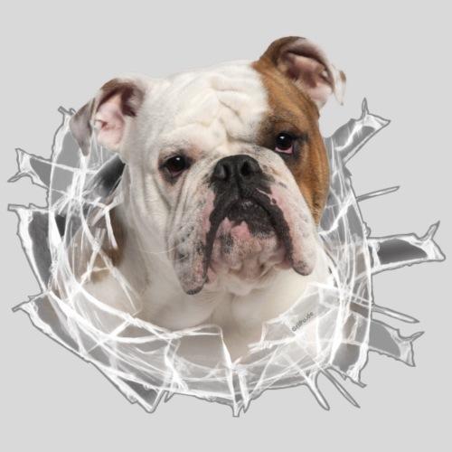 Englische Bulldogge *Glas-Loch*