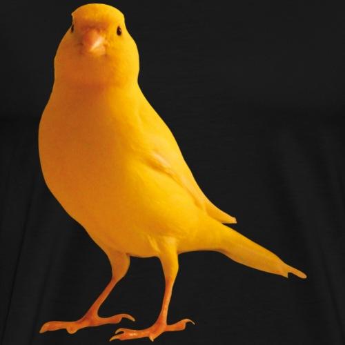 Kanarienvogel, yellow bird