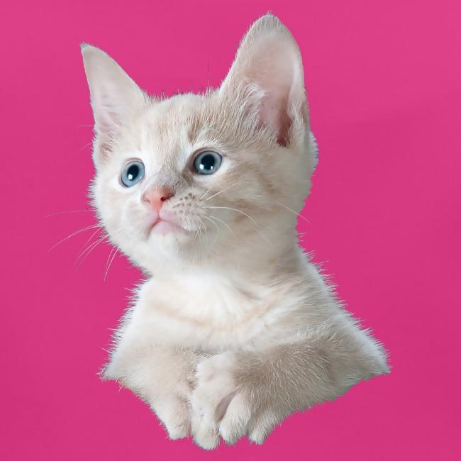Kitten poesje slabbetje