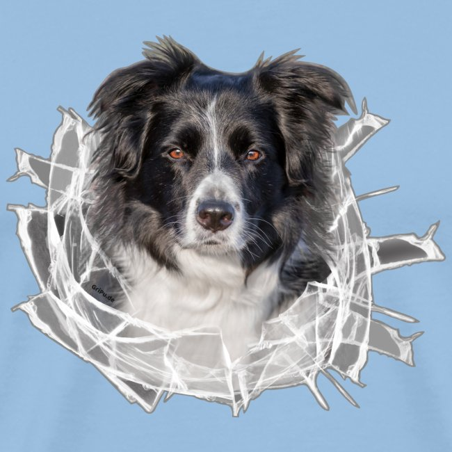 Border Collie im *Glas-Loch*