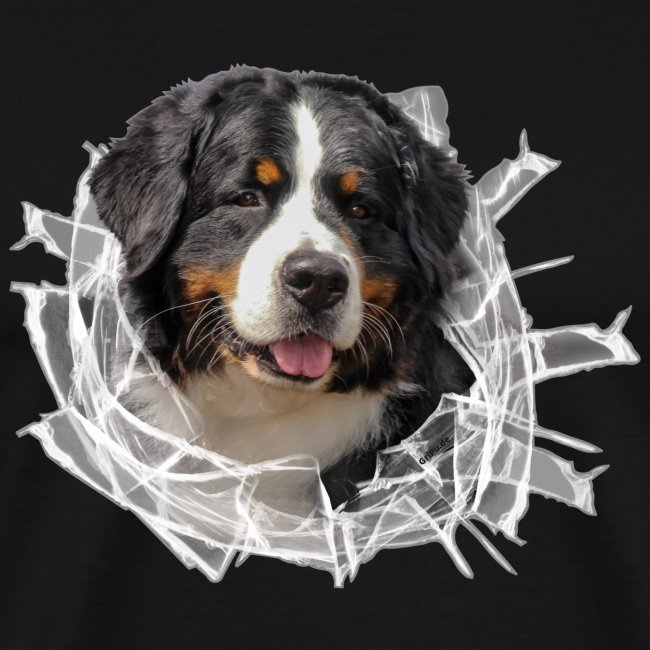 Berner Sennen Hund im *Glas-Loch*
