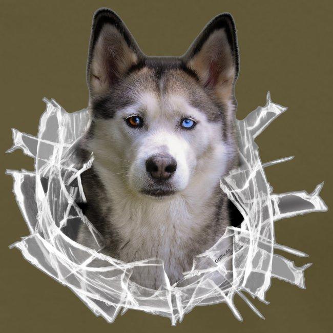 Husky im *Glas-Loch*