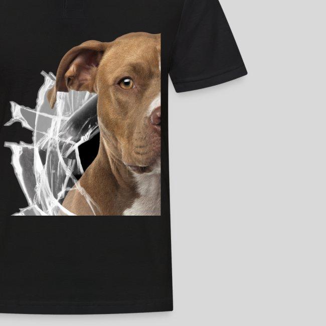 American Staffordshire Terrier *Glas-Loch*