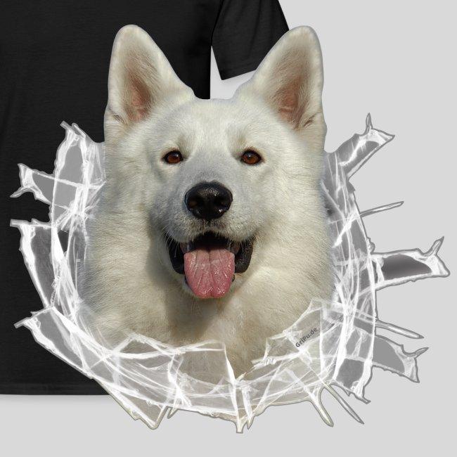 Weißer Schäferhund im *Glas-Loch*