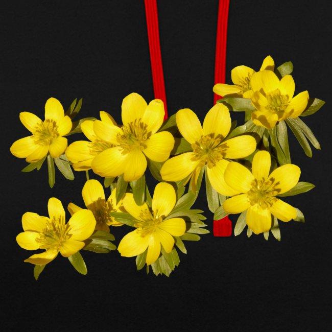 Winterling Frühling Spring