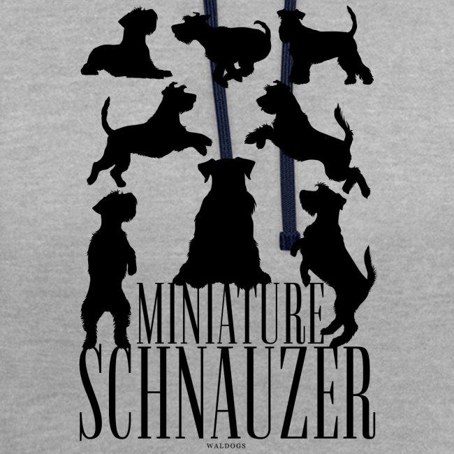 Miniature Schnauzer Black