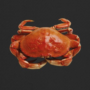 Red crab - Trucker Cap