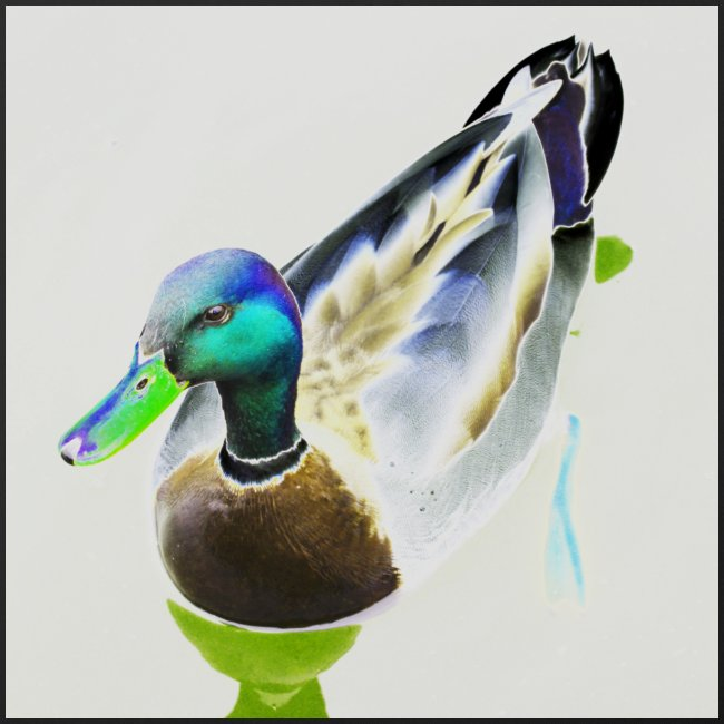 'Curious Duck' by BlackenedMoonArts