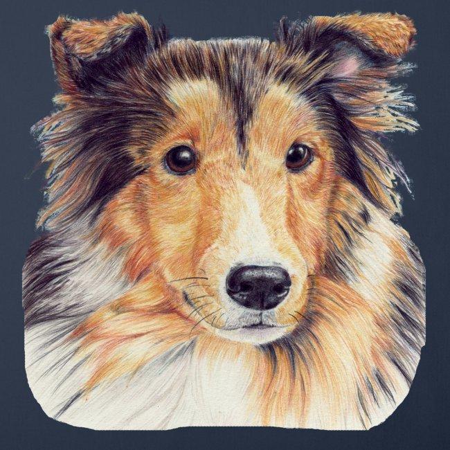 shetland Sheepdog 2