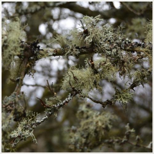 'Lichen' by BlackenedMoonArts - Pudebetræk 45 x 45 cm
