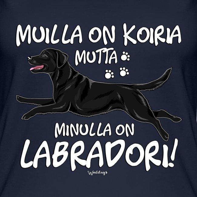 Labradori Koiria 3