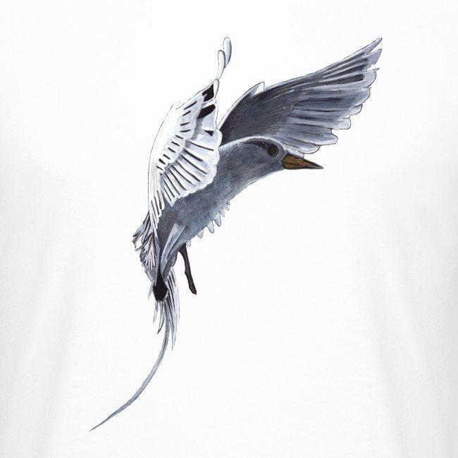 Weißschwanz Tropenvogel