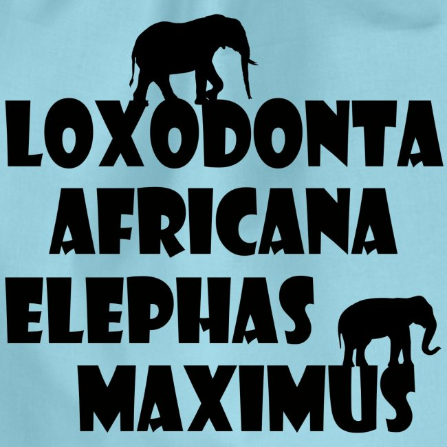 LOXODONTA AFRICANA - ELEPHAS MAXIMUS