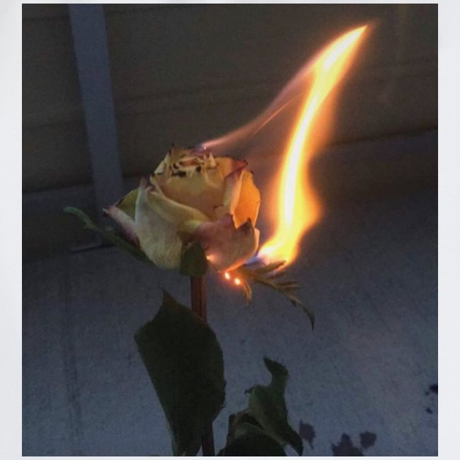 Burning Rose Tumblr Look gut Contras Reiches Bild.