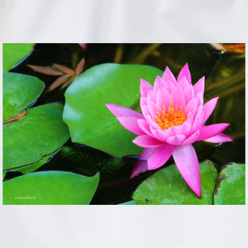 Pink waterlily - Sacca sportiva