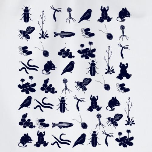 Modellorganismen dunkel - Turnbeutel