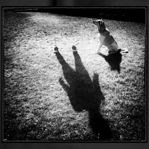 """SHADOW - Print von """"Wilmas Pfotograf"""" *Exklusiv*"""
