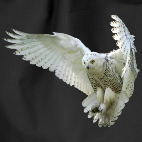 Majestic Snowy Owl in flight - Sac de sport léger